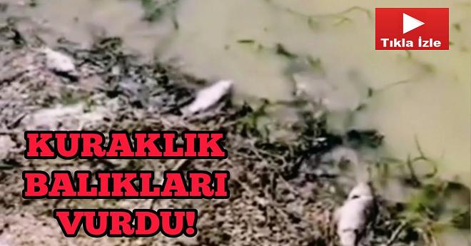 Kuraklık Van'da Balıkları Vurdu!
