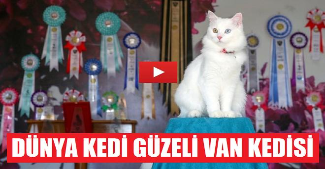 Uluslararası Kedi Güzellik Yarışması 1.si Van Kedisi
