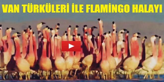 Van Türküleri ile Flamingo Halayı