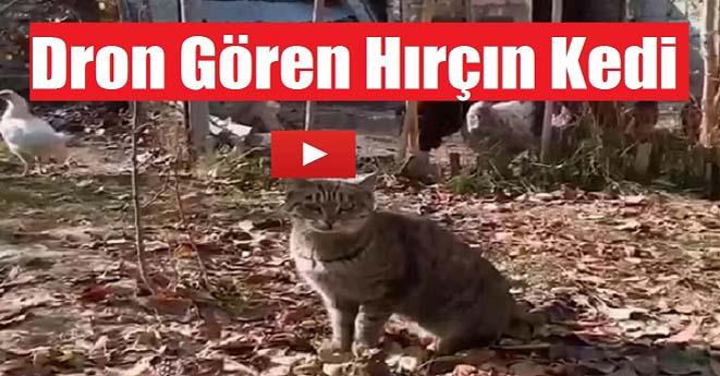 Dron Gören Hırçın Kedi