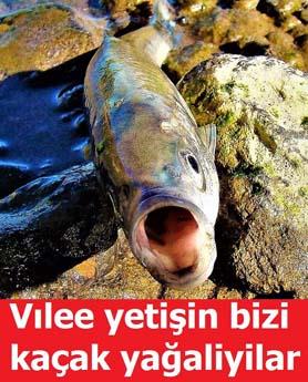 Komik Van Balığı Paylaşımları