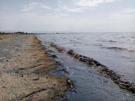 Van Gölü Kirleniyor